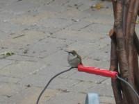 02hummingbird091206